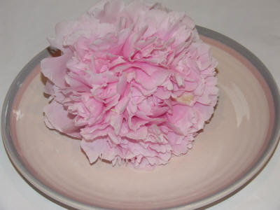 pink dinner plate size peony