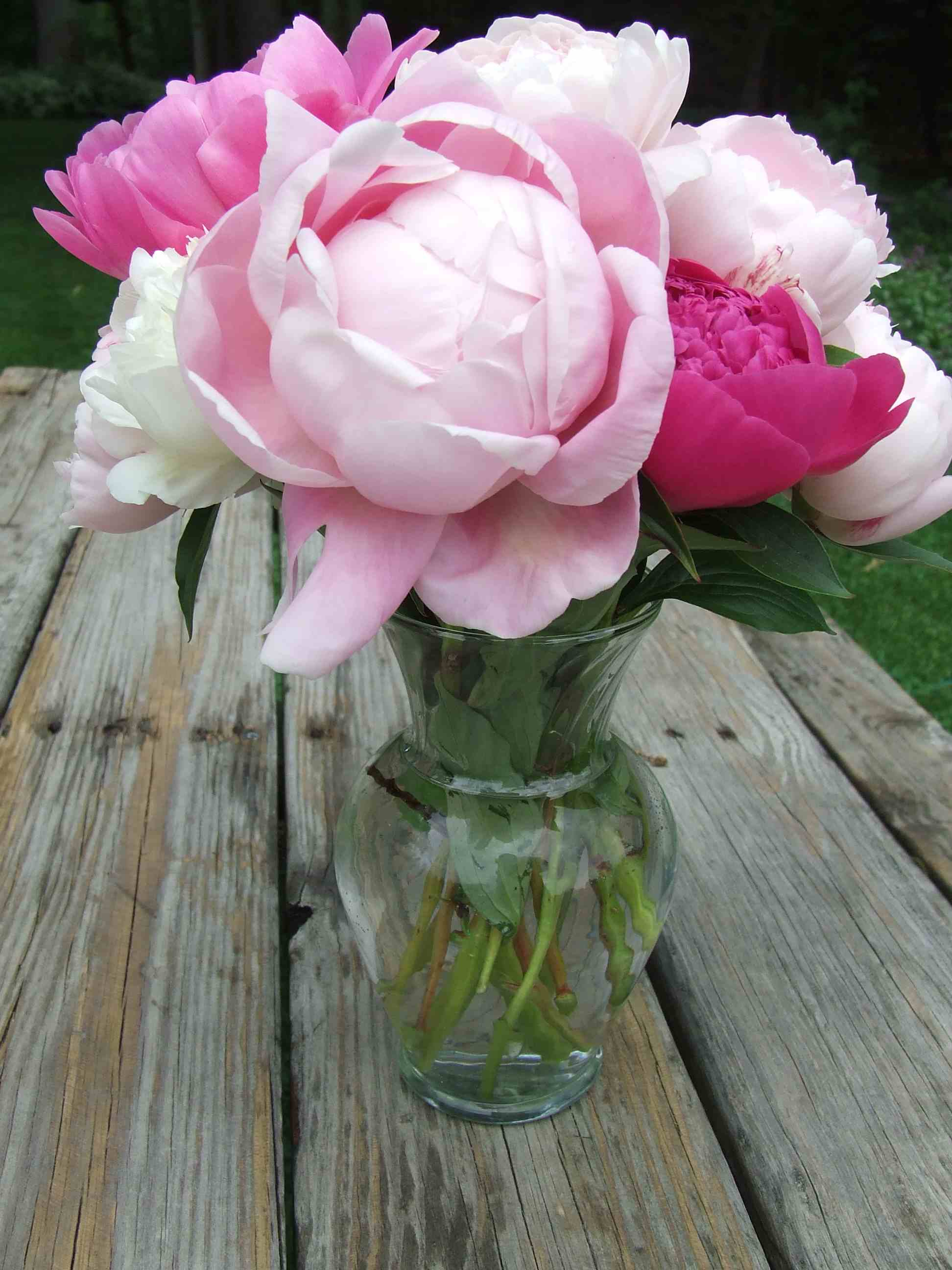 Peony flower bloom photos from june 2010 light pink peony flower pink peony flower arrangement mightylinksfo